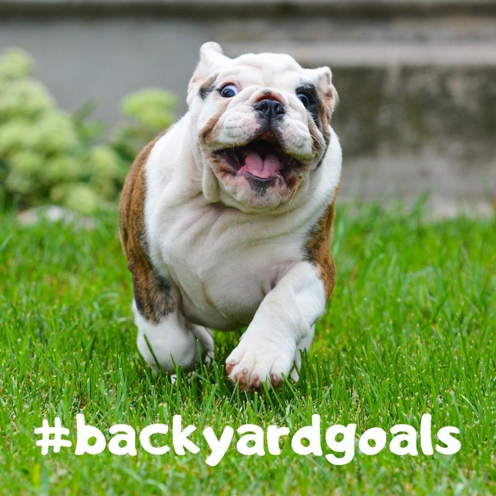 Backyards For Pups