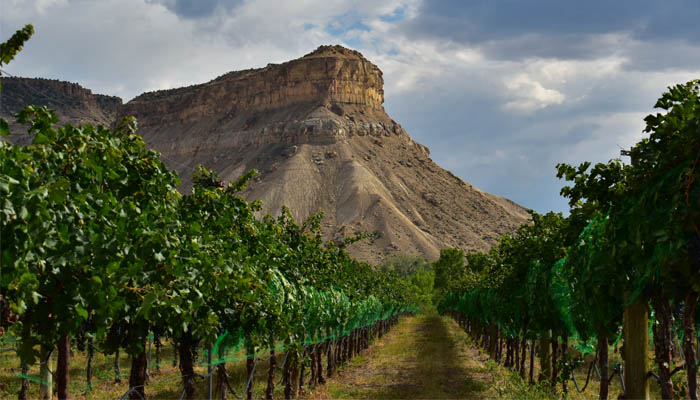 Vineyard in Palisade, Western Colorado's wine growing region.